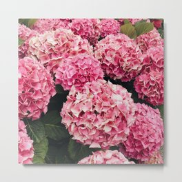 Pretty Pink Hydrangeas Metal Print