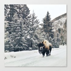 Frosty Bison Canvas Print