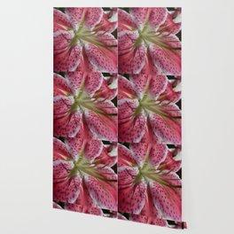 Stargazer Lily Wallpaper