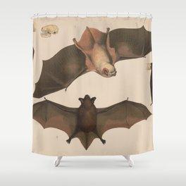 Vintage Flying Bat Illustration (1874) Shower Curtain