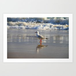 REFLECTIONS OF A SEAGULL Art Print