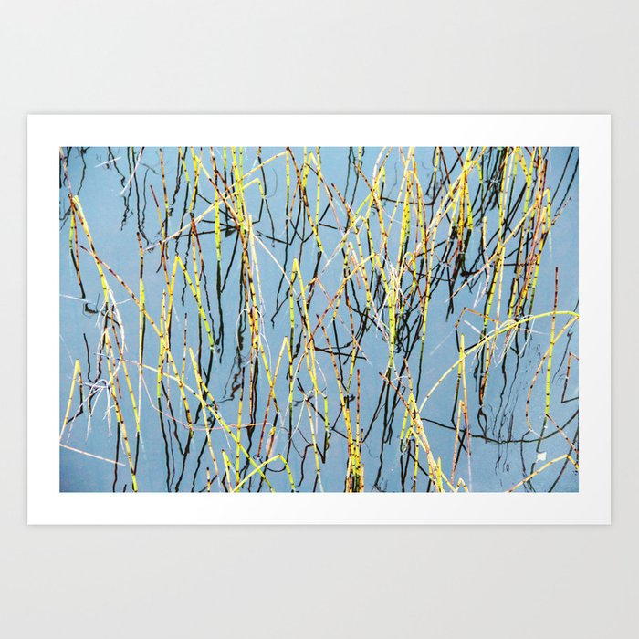 Horsetail and blue water Art Print