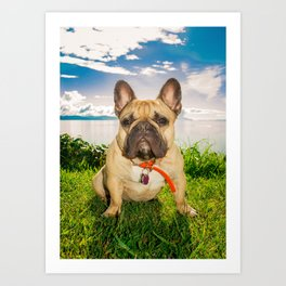 Frenchie in the Sun Art Print