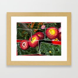 Helicrysum flower Framed Art Print