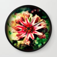 succulent Wall Clocks featuring Succulent by Eve Penman