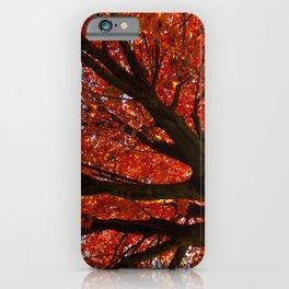Shimmering Orange: Autumn Maple Tree Nature / Botanical Photograph iPhone Case