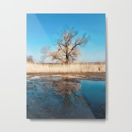 Tree on the Lake Metal Print