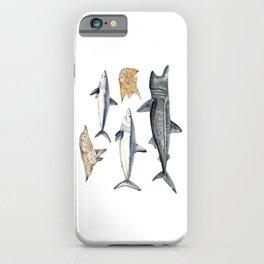 Shark diversity iPhone Case