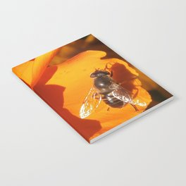 Golden California Poppy With Bee Notebook
