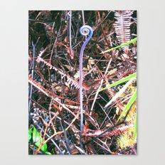 Tree Fern Curl Canvas Print