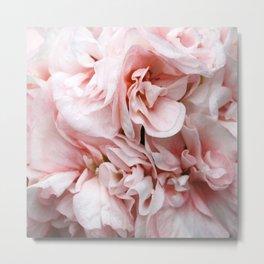 Pelargonium Dreams - Sophie Emma Metal Print