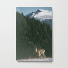 Hello spring! - Landscape and Nature Photography Metal Print