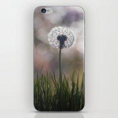 dandelion....i wish iPhone & iPod Skin