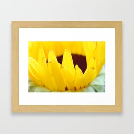 Sunflowers Face the Sun Framed Art Print