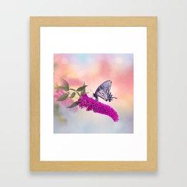 Black Swallowtail Butterfly Feeds on purple flowers Framed Art Print