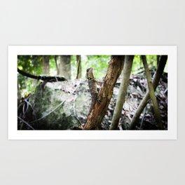 Tree Lizard Daintree QLD, Australia Art Print