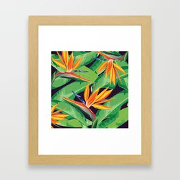 Bird of paradise flower Framed Art Print