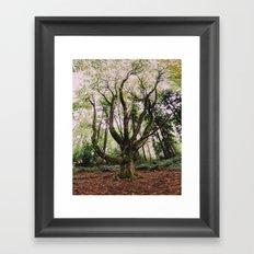 Forest Magic Framed Art Print