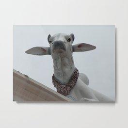 Cows on the roof   Metal Print