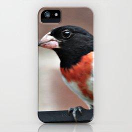 Male Rose-Breasted Grosbeak iPhone Case