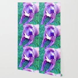 Blue Pit Bull Dog Wallpaper