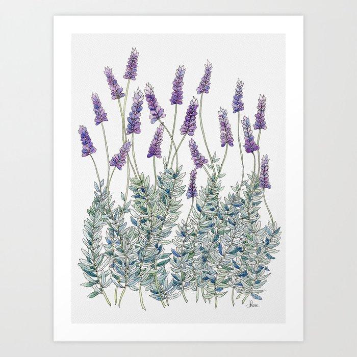 Lavender, Illustration Art Print