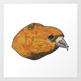 Red Crossbill Art Print