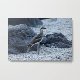 Curlew bird on the beach at Daydream Island Whitsundays Metal Print