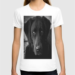 Loyalty  Black Lab  T-shirt
