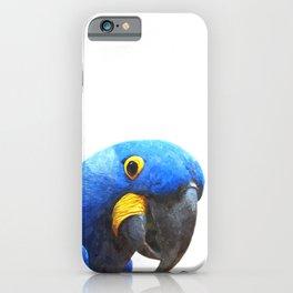 Blue Parrot Portrait iPhone Case