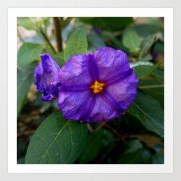 flower and nature - blue flower 2 Art Print
