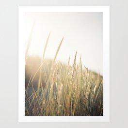 Seagrass in the sun Art Print
