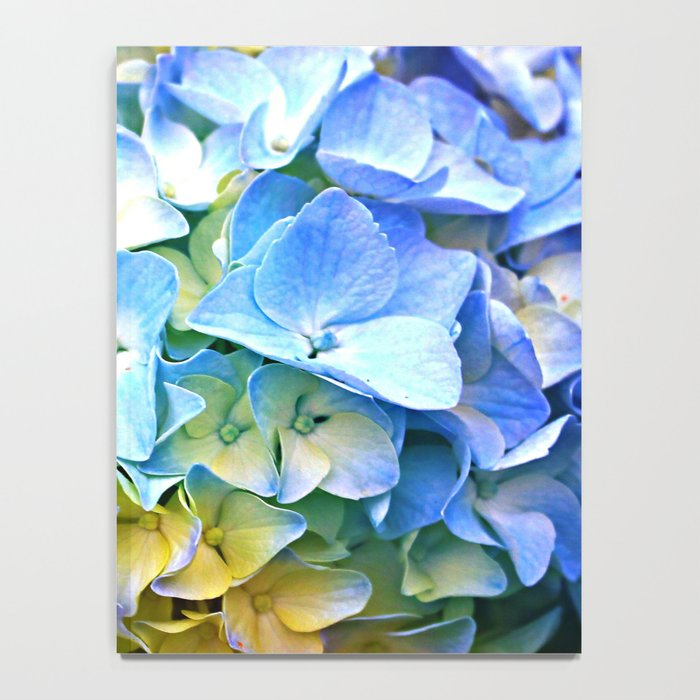 Soft Pastel Tri-Color Hydrangea Notebook