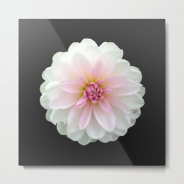 LONELY DAHLIA Metal Print