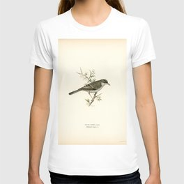 Barred warbler  (Sylvia nisoria) illustrated by the von Wright brothers T-shirt