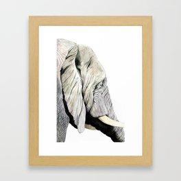 Elephant Gaze Framed Art Print