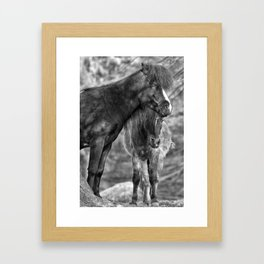 Two poneys Framed Art Print
