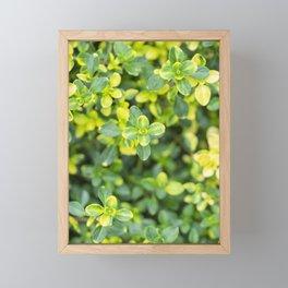 Nature floral herbal pattern Framed Mini Art Print