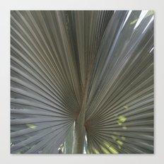 Gray Frond DP150314-16 Canvas Print