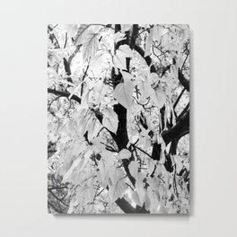 White Tree Photography Metal Print