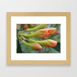 Arrival of Spring Framed Art Print