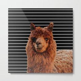 Llama Drama Metal Print