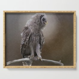 Young Barred Owl Perches on a Branch.Digital painting Serving Tray