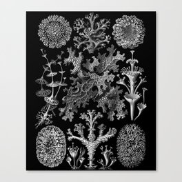 Lichens(Lichenes) by Ernst Haeckel Canvas Print