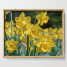 Daffodils in a field Serving Tray