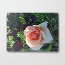 Every Rose Has It's Thorns Hidden Metal Print