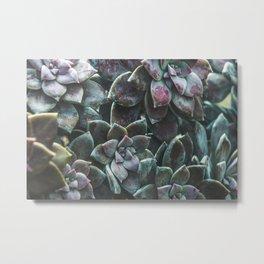 Botanical Gardens II - Succulents #157 Metal Print