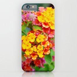 Lantana Clusters iPhone Case