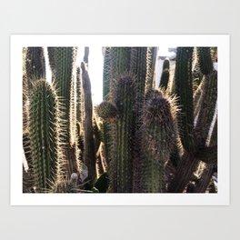 Kaktus / color Art Print