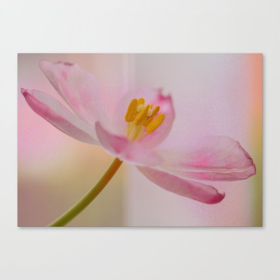Dreamy Pink Canvas Print